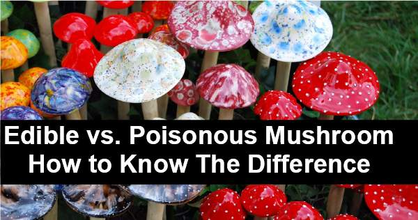 Edible vs Poisonous Mushrooms – What Is The Difference?