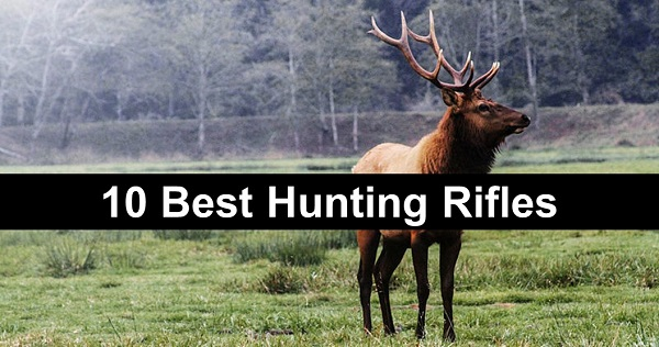 10 Best Rifles for Elk Hunting in 2017