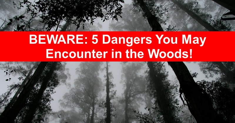 Beware: 5 Dangers You May Encounter in the Woods (and what to do about it)