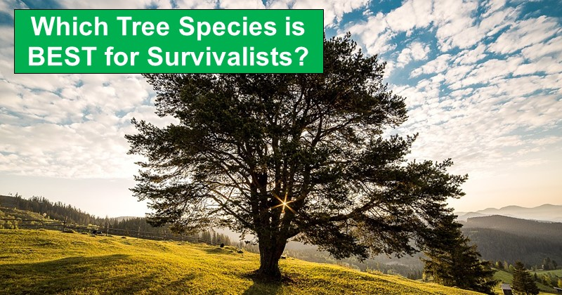 7 Common Trees Ranked for Survival Purposes