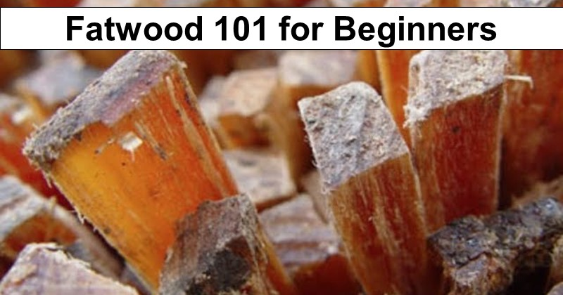 Fatwood 101 for Beginners