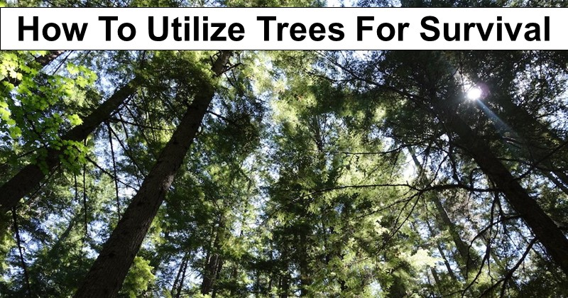 How To Utilize Trees For Survival: The Ultimate Guide To Surviving Off Of Trees