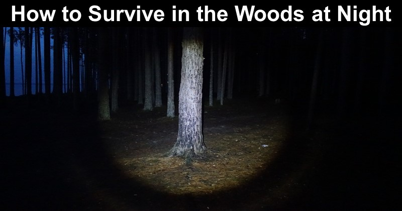 How to Survive in the Woods at Night