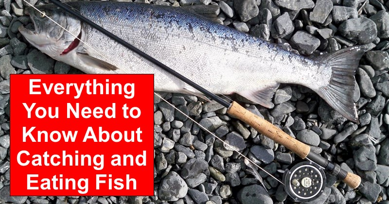 Everything You Need to Know About Catching and Eating Fish
