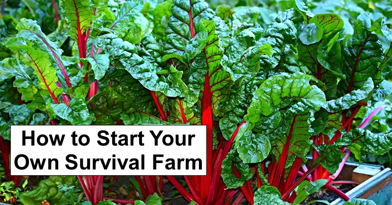 How to Start Your Own Survival Farm