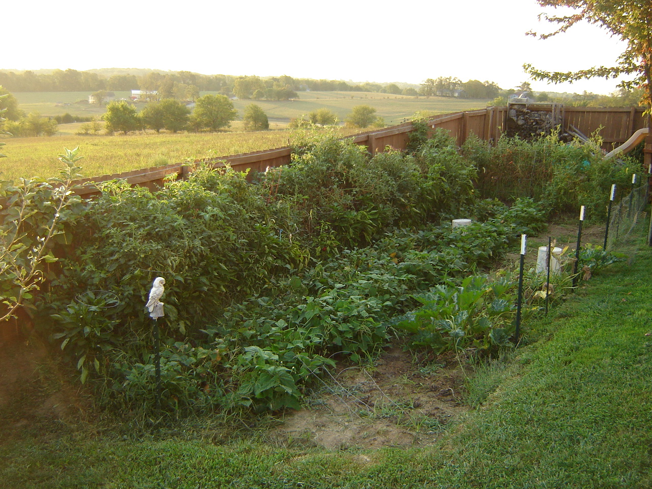 one reason not to rely on a shtf vegetable garden